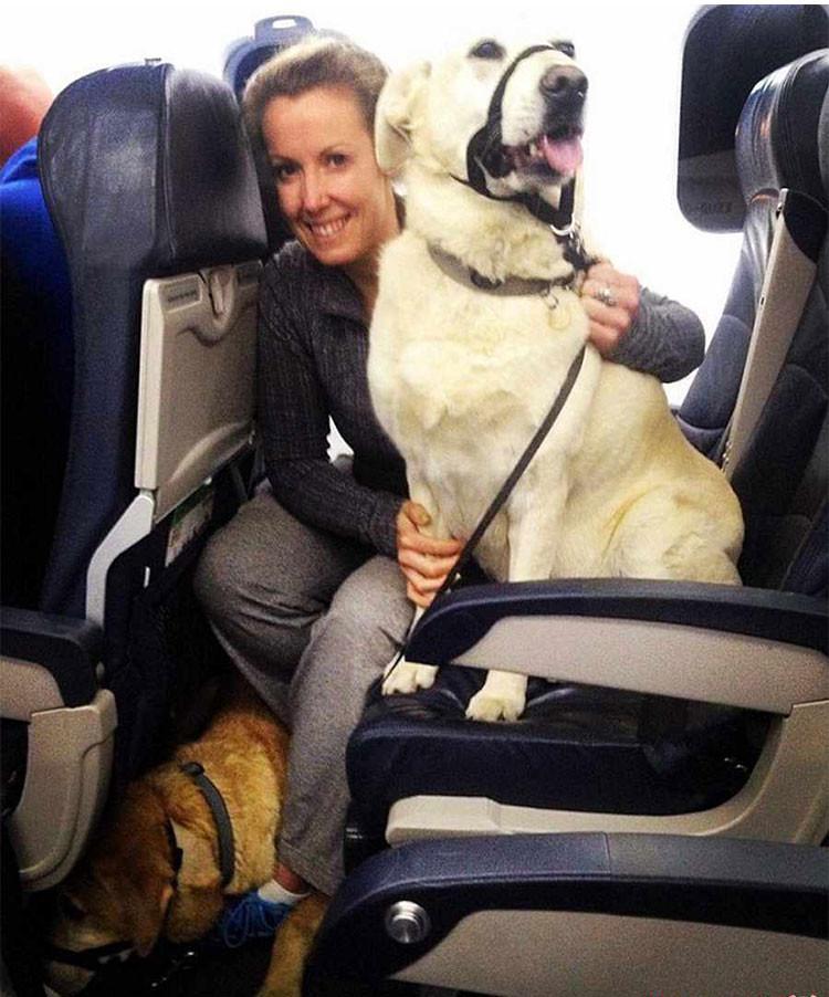 این حیوانات خانگی به داخل هواپیما راه پیدا کردند